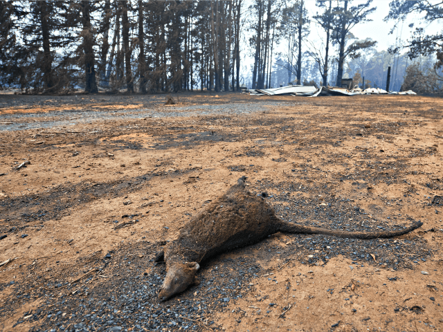 Australian Officials: As Many as One Billion Animals Could be Lost in Ongoing Bushfires