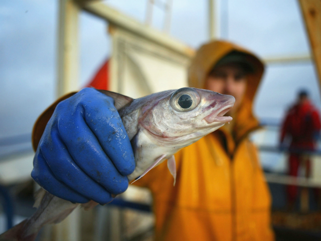 EU Holds Trade Deal Ransom for Access to UK Fishing Waters