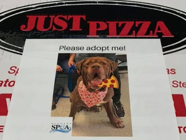 New York Pizza Shop Puts Shelter Dog Pictures on Deliveries to Promote Adoption