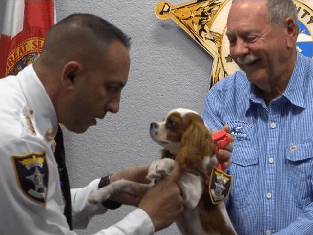 Florida Sheriff's Office Deputizes Dog Saved from Alligator's Clutches