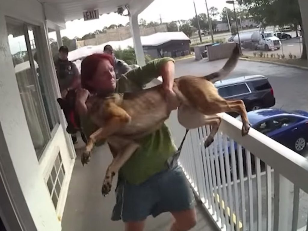 Court to Decide Custody for Dog Tossed over Florida Motel Balcony