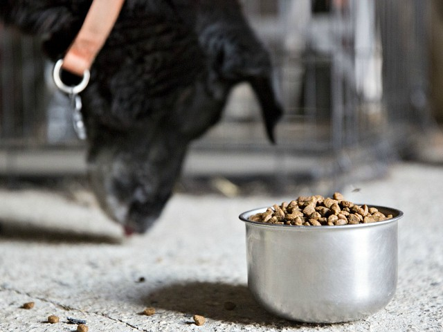 FDA: Midwestern Pet Foods Expands Recall After 70 Dogs Die