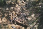 GRAPHIC: Half-Eaten Remains of Migrant Found on Texas Ranch near Border