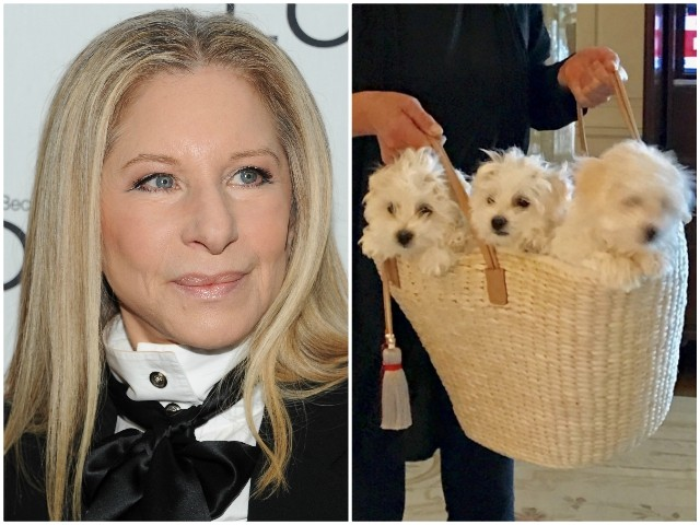 Barbra Streisand Outrages PETA by Cloning Her Dogs