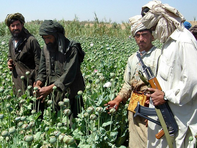 U.S. Air Campaign Destroys $42 Million Worth of Taliban Heroin Profits