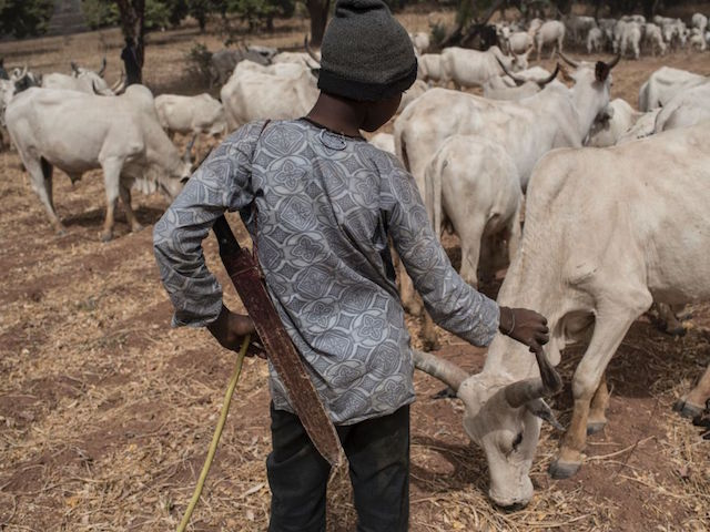 World View: Killing of Two Priests Escalates Farmer-Herder Conflict in Benue State, Nigeria