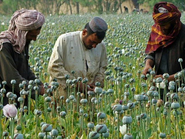 Feds: U.S. Taxpayer Funds Helping Irrigate, Fertilize Afghan Opium Funding Taliban