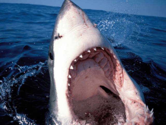 Two Children Attacked by Sharks Off Long Island