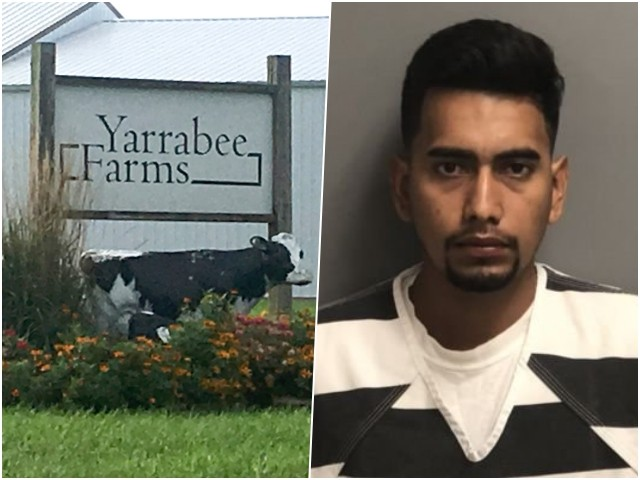 Defense Attorney: Dairy Farm Turned 'Blind Eye' to Illegal Alien Status of Alleged Mollie Tibbetts Killer