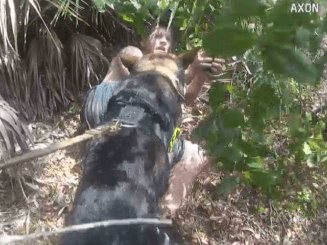 WATCH: K9 Takes Down Man Suspected of Kidnapping Child