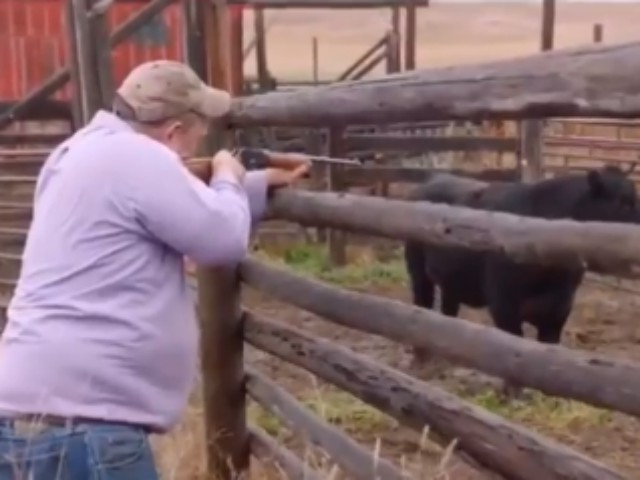 WATCH: Jon Tester, Great at Shooting Cows, Terrible at Supporting Pro-Gun Judicial Nominees
