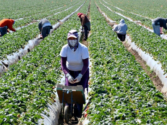 Democrats' Shutdown Deal: Amnesty for 1.5M Illegal Alien Farm Workers