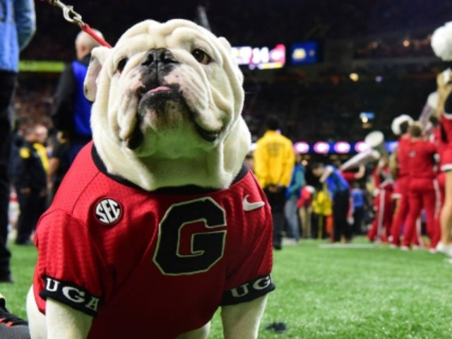 PETA Wants Texas and Georgia to Stop Using Live Animal Mascots After Bevo-UGA Sugar Bowl Confrontation