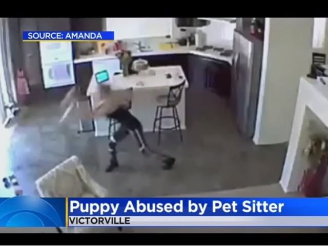VIDEO: Pet Sitter Caught Throwing Puppy on the Ground