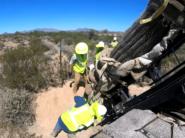 Video: Border Wall Crews Migrate Protected Cacti