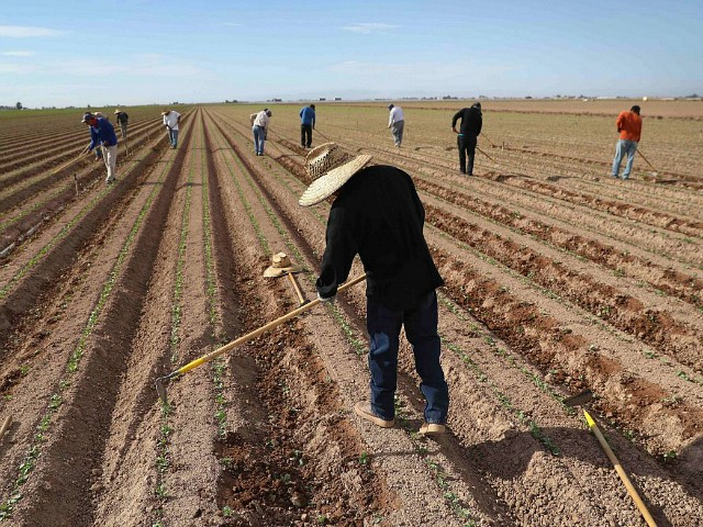 Chamber of Commerce Backs Farmworker Amnesty but Wants More Migrants and Lower Wages
